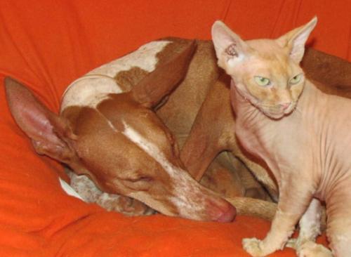 Vida s kočičím parťákem (foto poskytla Pavlína Rusnáková)